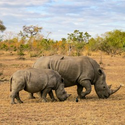 Kruger, South Africa, Safari