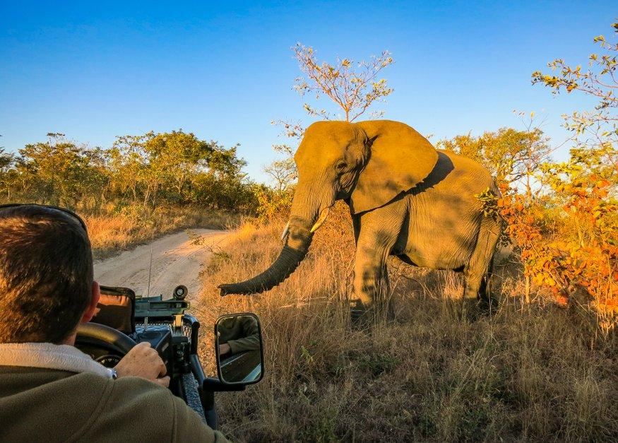sabi sands safari
