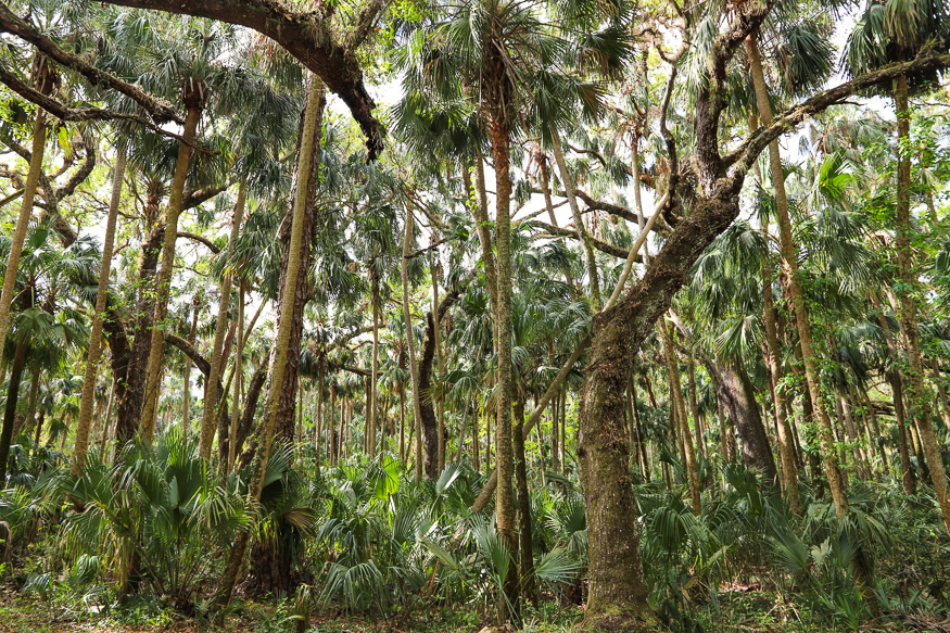 Primordial Forest of Florida