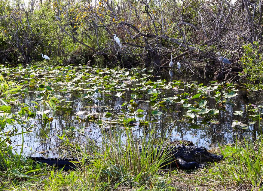 Wildlife of Floridas parks