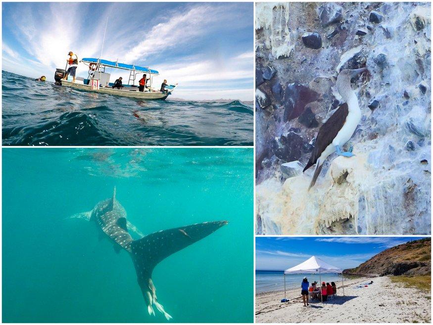 Whale Shark Tour La Paz Baja