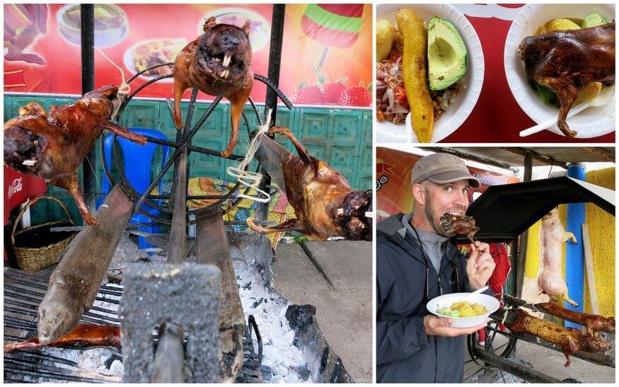 ecuadorian guinea pig