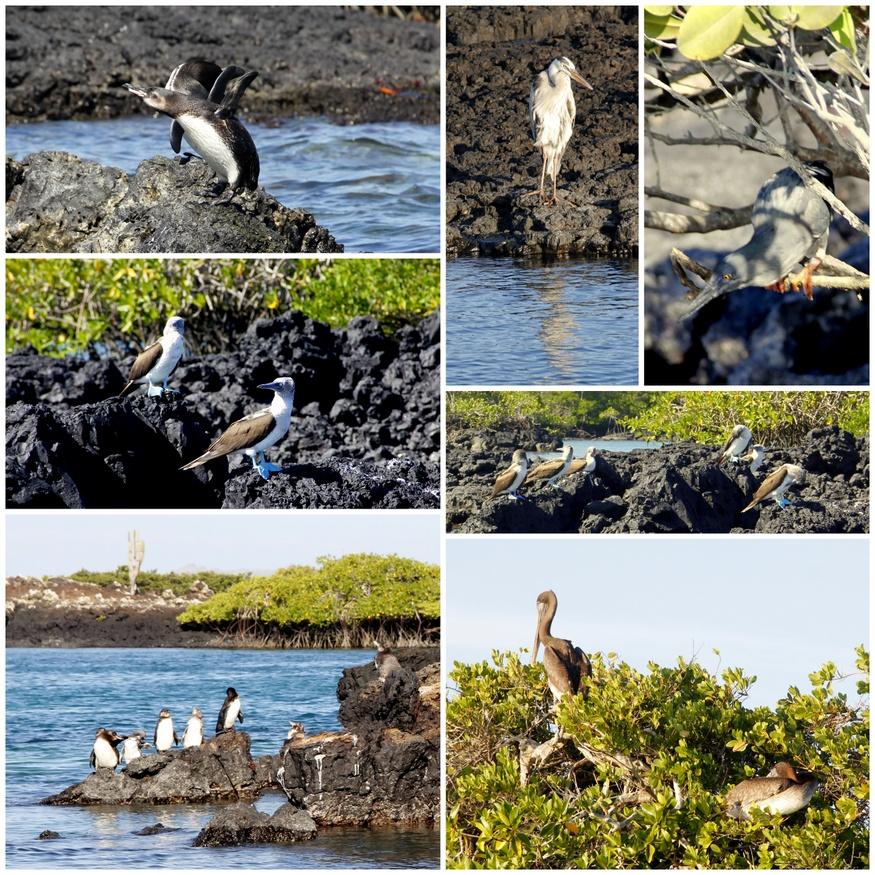 Birdlife of the Galapagos