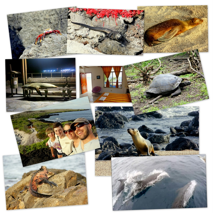 Galapagos Collage