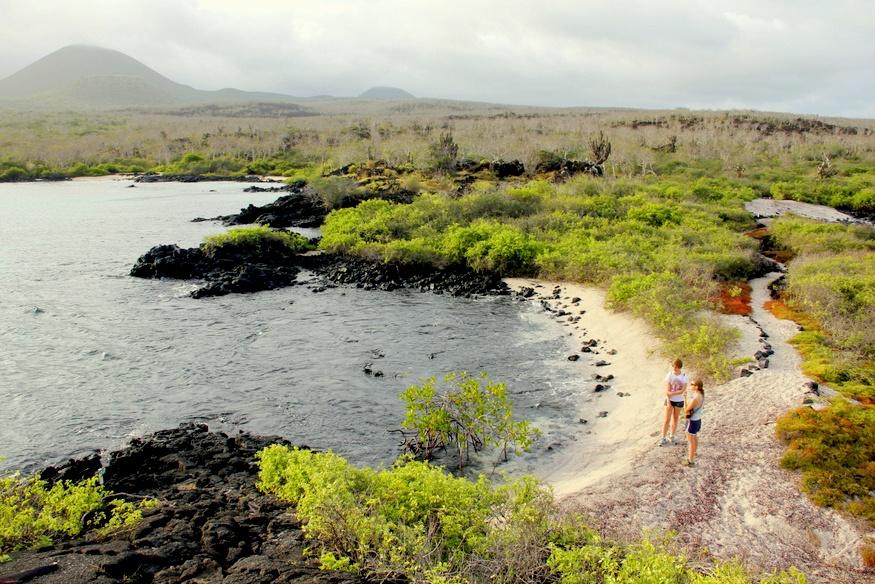 Galapagos Vegitation