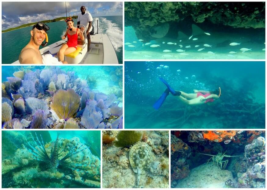 snorkeling eleuthera